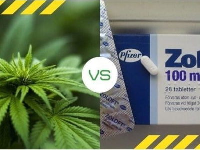 marijuana and zolot