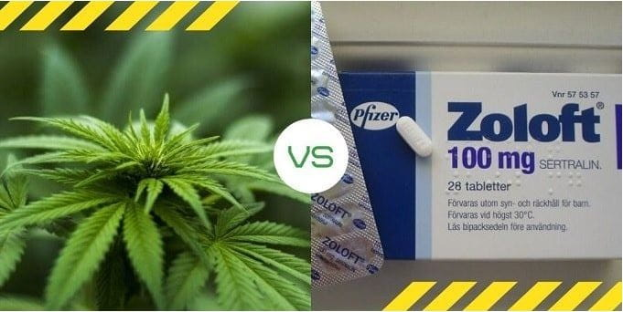 marijuana and zolot