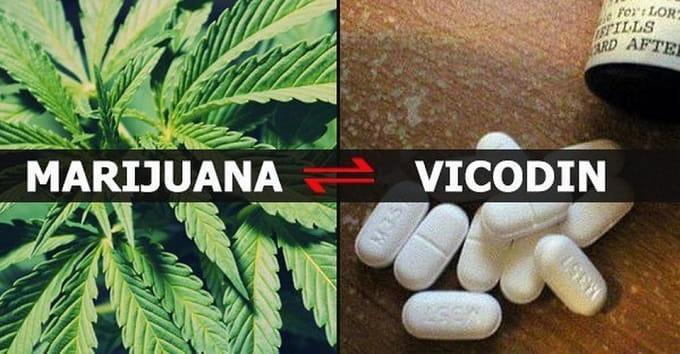 vicodin and marijuana