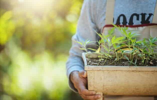 grow hemp